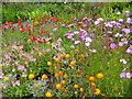 NG8582 : Inverewe Gardens by Dannie Calder
