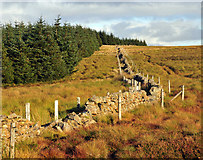 NS7604 : Three fences barr the edge of the forest by Greg Morss