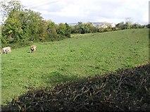 C2507 : Mondooey Townland by Kenneth  Allen